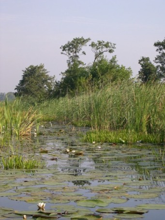 weerribben-water